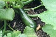 Growth In Goffney Garden